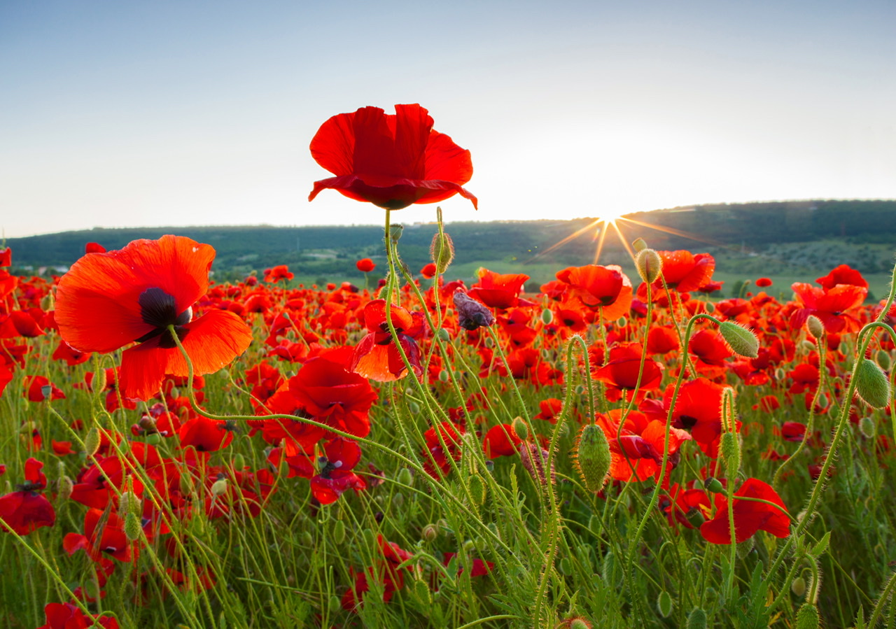 Saturday 2nd & Sunday 3rd Nov - Remembrance Day